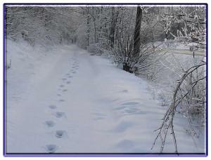 Goslar im Schnee