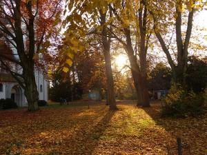 Herbstwanderung im Novemberwald