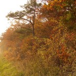 Goldener November im Harz